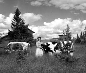 1968 var Anna Svensson bukulla i Håkansvallen, Vemhån. När ÖP träffade henne var hon 64 år och hade över 50 fäbodsommrar bakom sig. När hon var 10 år började hon hjälpa till med mjölkningen och när hon var 13 år var hon självständig bukulla, berättade hon i artikeln. Skällkon på bilden hette Stjärna.