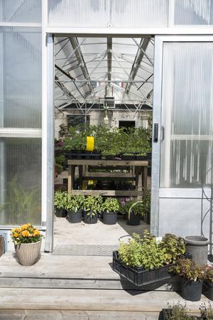 I de gamla växthusen spirar växterna igen. De allra flesta är odlade av Lisa, Linn och Magdalena.