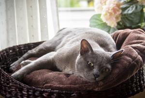 En av familjens katter vilar sig i köket.