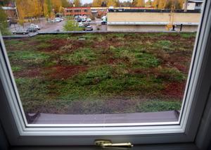 Taket över entrén har växter, som ska påminna om Orsas myrar.