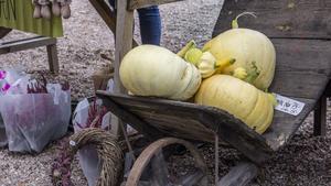 Pumpor kan också vara fina att inreda med till hösten.