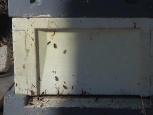 Vår yra bin på Hallbacken i Vallsta