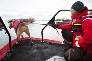 En sjöräddningshund i Sverige får aldrig hoppa i och simma eftersom det är stora risker när det är höga vågor.