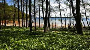 Riddersholm är kanske allra vackrast på våren. Nu har det välbesökta naturreservatet blivit ännu större. Foto: Måna J Roos