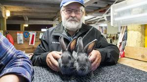 """Göran Stolpe säger att kaniner inte trivs ihop. Så fort de blir könsmogna måste de säras på om de är av samma kön. """"Två hanar slåss och försöker kastrera varandra"""", säger han."""