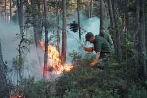 Omkring 30 brandmän kämpade tillsammans med lika många militärer för att få kontroll över en stor skogsbrand i Tyresta nationalpark. På bilden syns militärer med trädruskor i händerna bekämpa elden. Foto: Ingvar Svensson/SCANPIX.