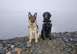 Nita och Nita har gått igenom tuffa test för att bli certifierade sjöräddningshundar.