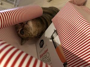 Husse behöver du hjälp med paketinslagningen? Lilly försöker vara hjälpsam när jag ska slå in paket. Bild: Simon Samuelsson