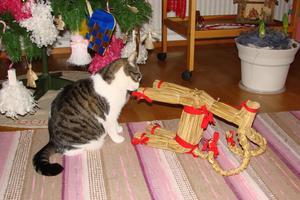 Nu tycker Tina att halmbocken regerat väl länge över granen. Dags för regeringsskifte och julgransplundring.