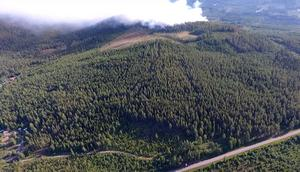 I Pålgård är skogen som brunnit ägd av privatpersoner. Foto: Emil Dahlgren