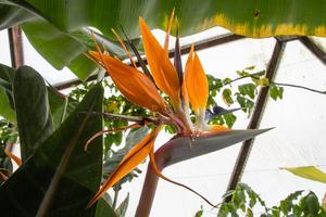 Exotiska blommor trivs i växthusets värme.