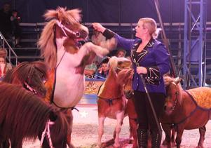 Hästar uppträder på cirkus.
