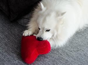 Det röda tyghjärtat är en av Baltazars absoluta favoritleksaker.