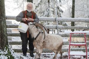 Getabocken Kim med sin familj bor i Sorunda, hos Anders och Barbro Rising.