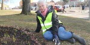 Merkuriusrabatten vid Kullstarondellen är en av Nynäshamns två så kallade paradrabatter. Här kommer det blomma i starka färger under både våren och sommaren, avslöjar  Barbara Brass, stadsträdgårdsmästare.