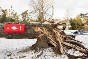 Ett träd som även tjänstgjort som brandsläckarhållare på Björkö Örns campingplats knäcktes av stormen.