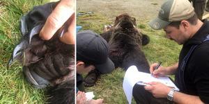 Förra året tog björnjakten slut när en älgjägare fällde en björn strax norr om Fränsta.