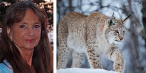 Journalisten Christina Lindberg skriver om jaktlobbyns grepp om svensk rovdjurspolitik i samband med att jakten på lodjur inleds i landet imorgon, 1 mars. I år får 83 lodjur skjutas.Foto: Pressbild (Christina Lindberg)/Heiko Junge/TT (lodjursbilden)