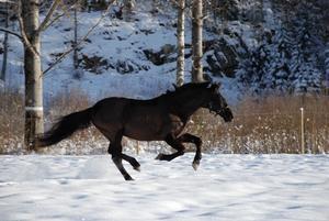 Bild: Mostphotos / GenrebildHästen på bilden har ingenting med de lösa hästarna att göra.