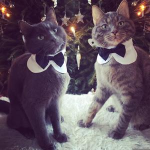 407) Busiga bröderna Gucci och Armani älskar julen och att få känna sig extra fina. Foto: Sandra Söderström