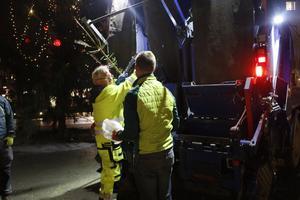 Kommunens Lennart Wallbom lassade in gran efter gran i sin lastbil på Stortorget.