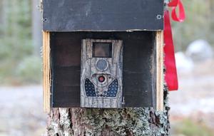 En kamera registrerar alla rörelser kring fällan i skogen...