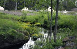 Allting ligger naturskönt på Hölick och i början av juni blommar den gula kabbelekan vid bäcken.