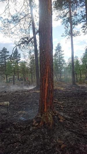 Skogsbränderna nu under kontroll.Foto: Räddningstjänsten i Idre.