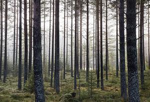 Forn- och kulturlämningar står i fokus på skogskvällen.