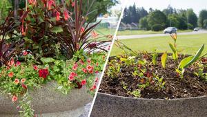 Efter och före invånarnas egna initiativ till blommor.