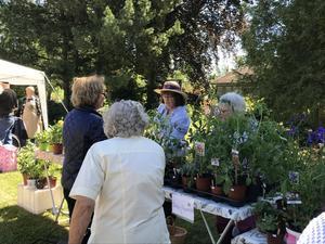 Växtmarknaden äger som vanligt rum i Svandammsparken.