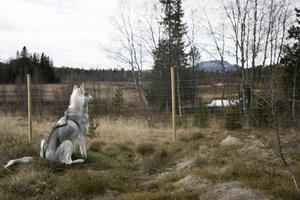 Utanför hundgården finns en stor rastgård där hundarna kan springa eller bara ta det lugnt.