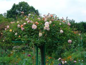 Lördagen den 31maj besökte vi den underbara trädgården i Giverny