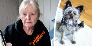Kirsti Åberg har blivit av med sin älskade hund Sune.