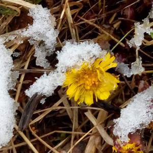 Bilden är tagen den 4 februari. Foto: Magdalena Alm