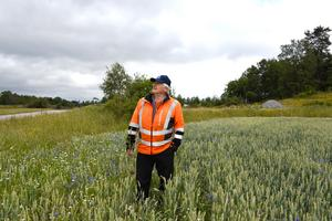 Blir det regn, kanske? Lars-Gunnar Dahlström granskar familjejordbrukets odlingar i Trollsta i Sorunda.