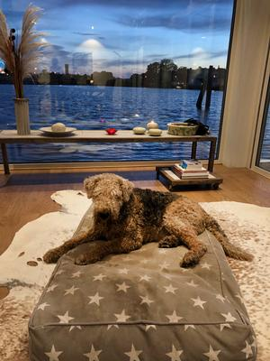 Hunden Aussie vilar med kvällsutsikt. Foto: Privat