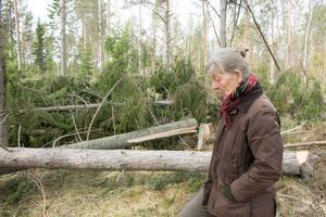 Lena Svenonius räknar med att omkring tio procent av hennes skog förstördes i stormen Alfrida.