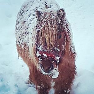 Lenninge ponnystall. Foto: Annika Wengelin