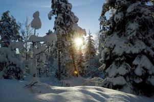 Foto: Leif Gustavsson