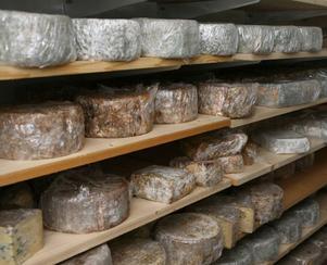Ostar av ko- och getmjölk kräver lagring innan de  smakar som bäst.
