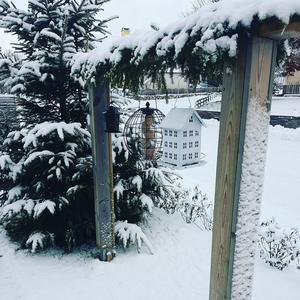 Hos Linda Julsgård i Lekeryd finns mat till småfåglarna nu när det blivit kallare och snöigare. Foto: Linda Julsgård