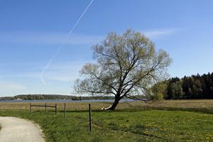 Som en blå målarduk blir himlen när flygplanen ritar vita sträck över den.