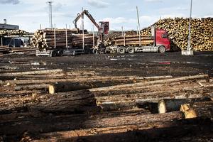 Av de 1800 medlemmar som finns i Gästrikland levererade 500 virke under 2018. Sågtimmer, massaved och biobränsle hör till föreningens produkter.