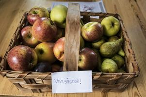 Frukt som skänkts av allmänheten.