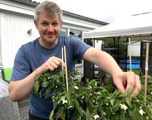 I våras flyttade Andreas från Linköping till Värnamo. Det gillade inte chiliplantorna, men de kommer snart att vänja sig tror han.