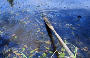 Delar av bäcken liknar just nu mest en dypöl.