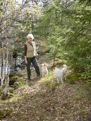 Foto: Börje FrelinKerstin Ekman vandrar ofta i skog och mark, gärna i sällskap med sina hundar. Att vandra är ett sätt att komma nära, att verkligen uppleva landskapet.