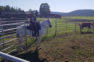 Maria Hell Andersson på Crach hjälper bönder att fösa kor och skilja kalvar. (Foto: privat)