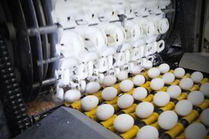 På packeriet tvättas, kontrolleras och märks äggen innan de paketeras och skickas ut i butikerna.